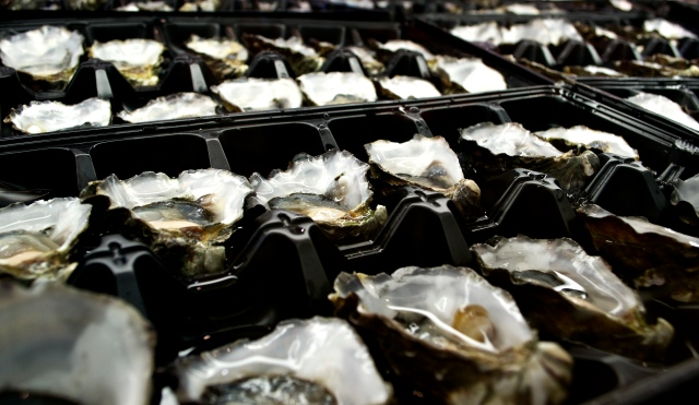 Sydney's Famous Rock Oysters